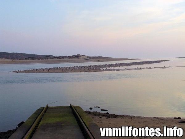 gaivotas em vila nova de milfontes